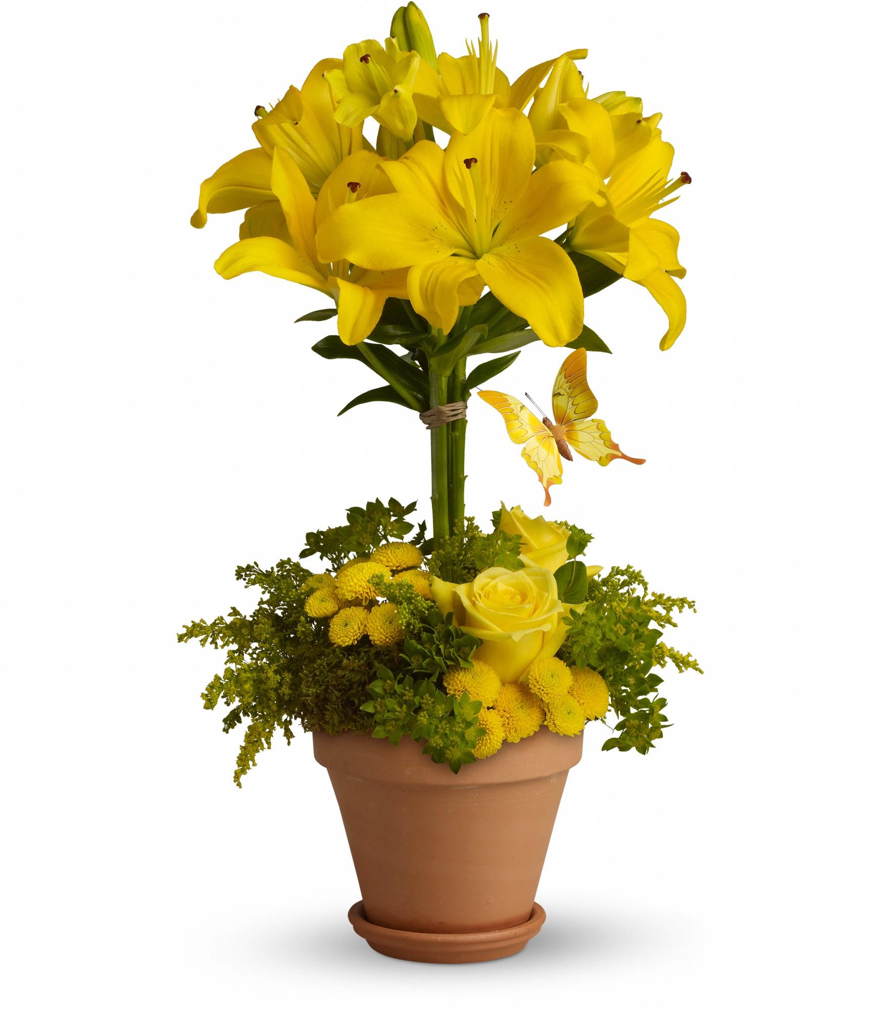 Fleuriste fleurs de cactus for Fleurs de fleuriste